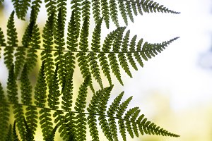 Fern leaves against the sky