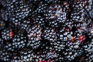 Homegrown Fresh Blackberries