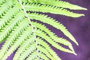 Fern leaf green on a purple