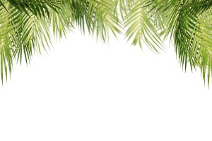 Hanging palm leaves, isolated