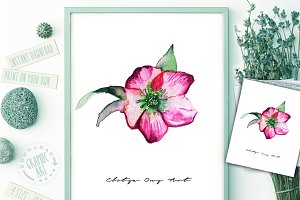 Prints Shabby Chic Watercolor Flower