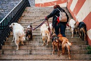 Multi-dog walker
