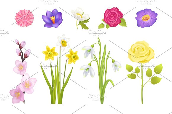Spring Flowers Set Poster Vector Illustration