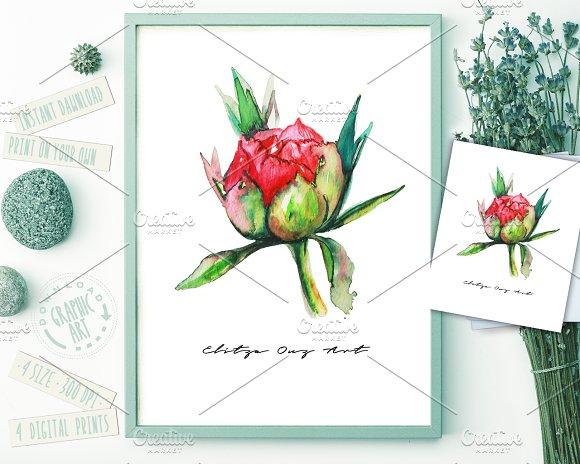 Peony Watercolor Prints