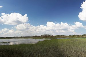 marshes of north Florida