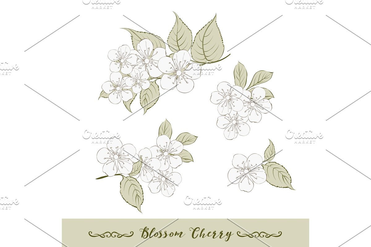 Set of cherry flowers elements.