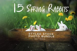 Spring Rabbits Stock Photo Bundle