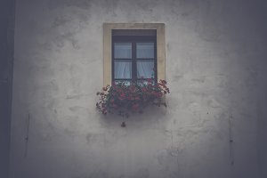 Window with flowers in box