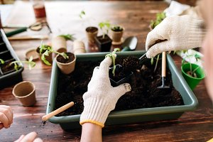 Female hands planting seedlings