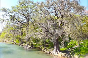 Mossy Trees on River