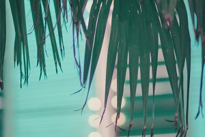 Palm Leaves and Neon