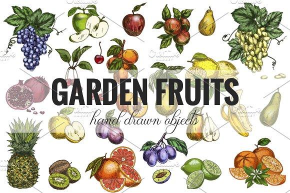 Garden Fruits Vector Collection