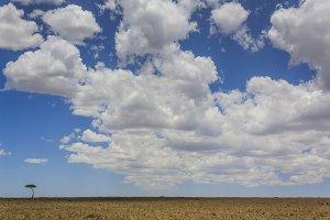 Single tree and cloudy sky