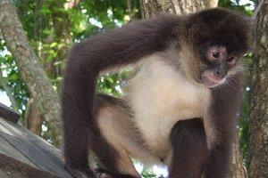 Monkey looking at something sitting