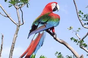 Colorful parrot sitting on the tree