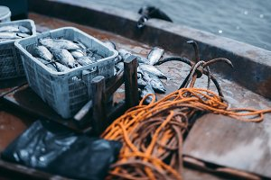 Take of a fresh tuna on the vessel
