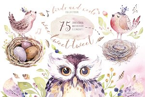 Birds and nests collection