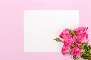Roses on pink pastel background