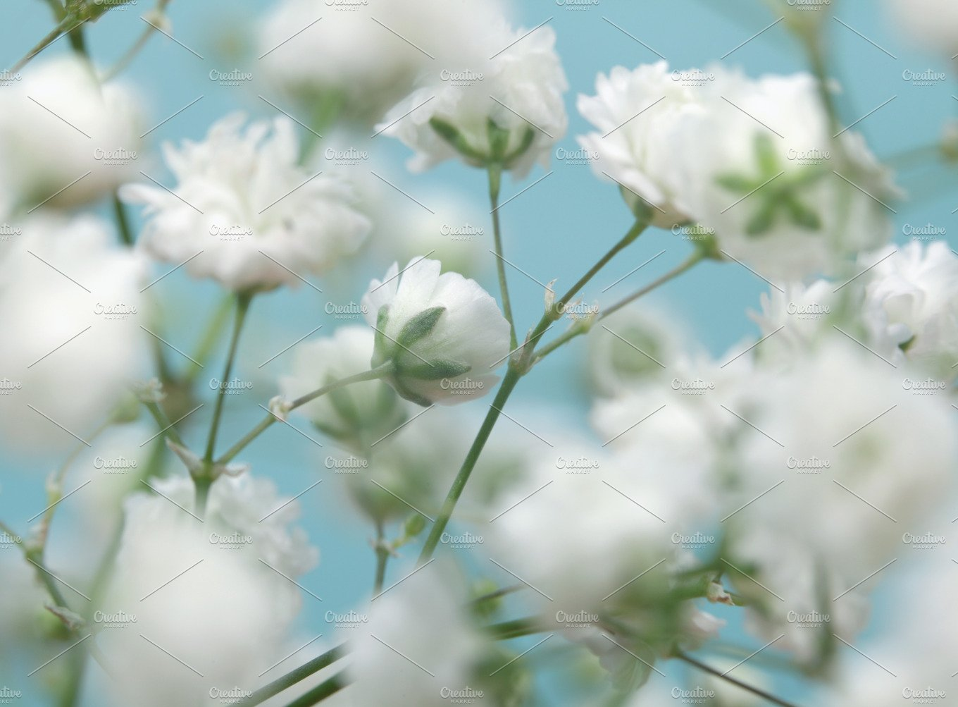 White flower on blue background ~ Abstract Photos ~ Creative Market