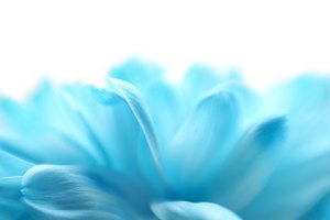 Soft focus flower background