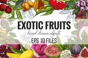 Exotic fruits. Vector collection.