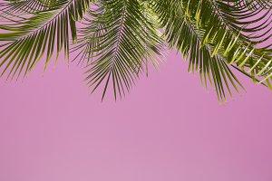 Palmas in pink sky