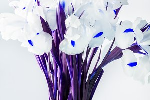 Beautiful White Iris Flowers in the Vase
