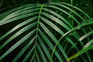 Green narrow palm leaves.