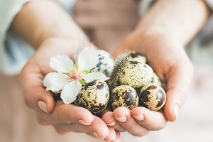 Quail eggs and almond flower in woman's hands, square crop