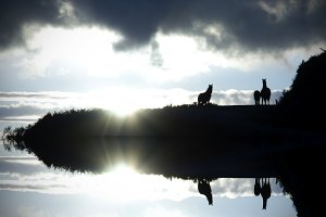 Horse silhouette with reflection in