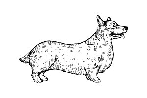 Welsh Corgi dog engraving vector illustration