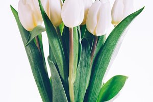 Bunch of fresh white tulips tied tog