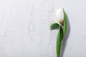 Single white spring flower on a marb