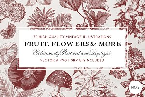 70 Fruit & Flower Illustrations No.2