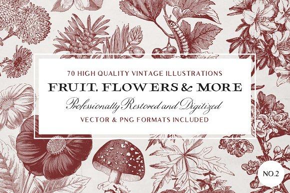 70 Fruit Flower Illustrations No.2