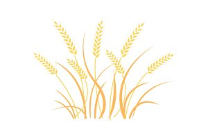 Wheat field background. Cereals icon set.