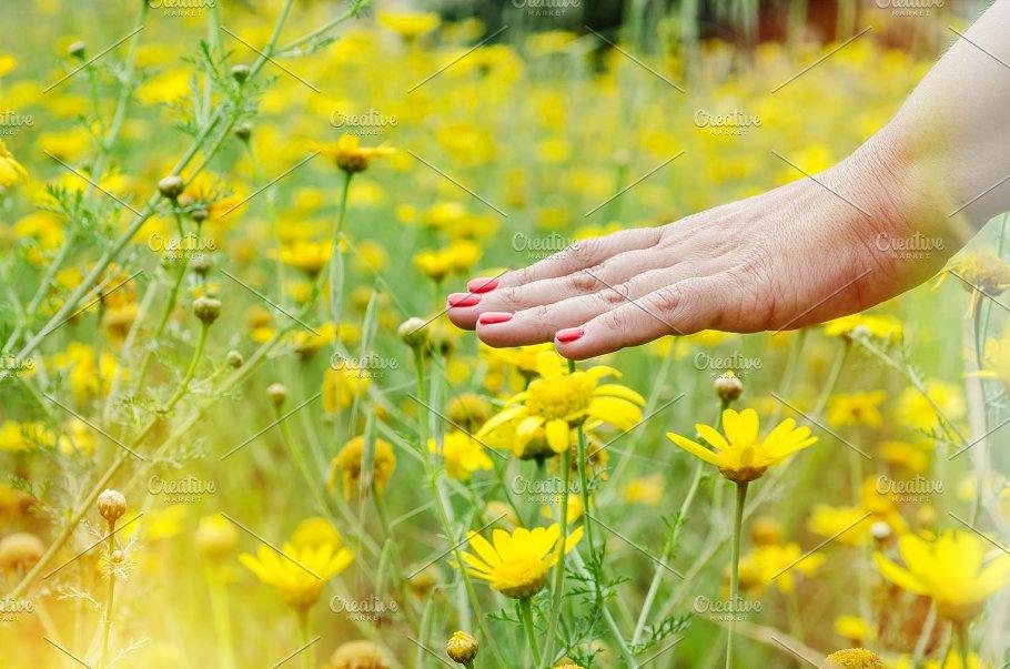 Yellow flowers field womans hand nature photos creative market yellow flowers field womans hand nature mightylinksfo