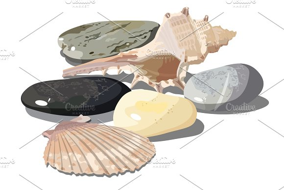 Vector Seashell And Sea Pebbles