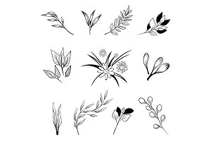 Collection of hand drawn flowers and plants.