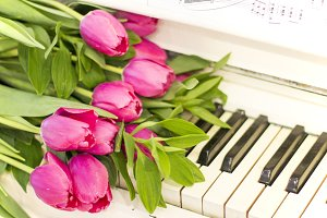 Pink tulips on white piano