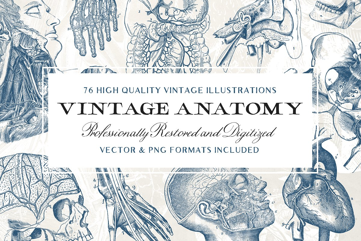 76 Vintage Anatomy Illustrations in Illustrations - product preview 8