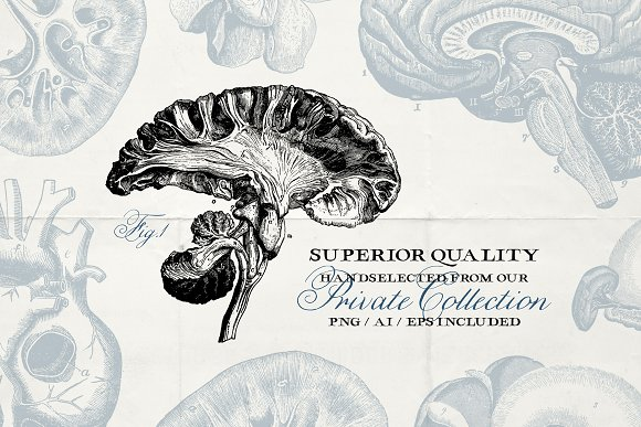 76 Vintage Anatomy Illustrations in Illustrations - product preview 2