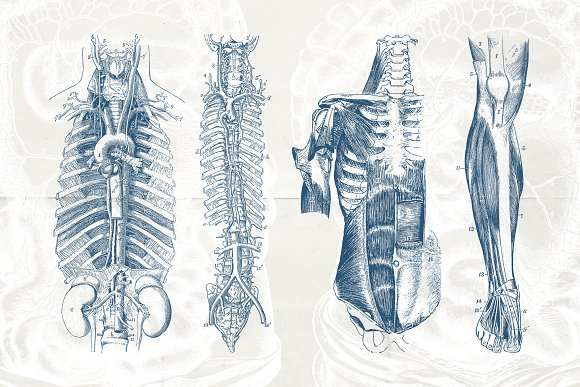 76 Vintage Anatomy Illustrations in Illustrations - product preview 4