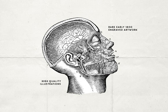 76 Vintage Anatomy Illustrations in Illustrations - product preview 5