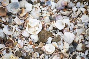 Seashells wallpaper.