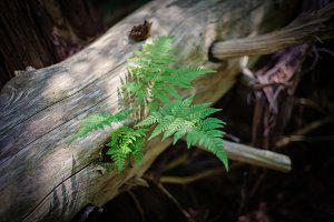 Fern on a Log