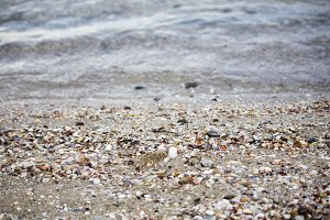 Seashells on the shore. wallpaper