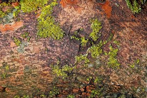 Moss over wood