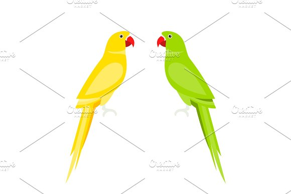 Cartoon Cute Parrot Large Parakeets