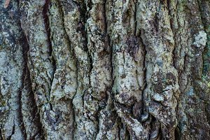 Bark of tree textured background